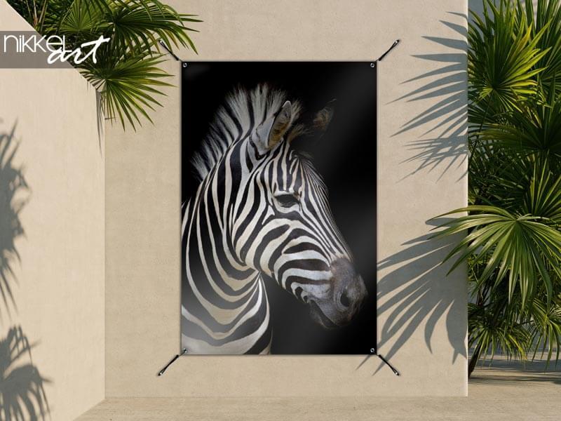 Poster de jardin Zebra sur fond sombre