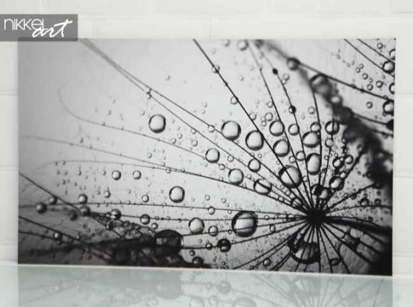 Photo sur Aluminium Pissenlits et eau