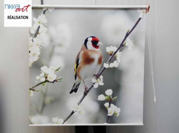 Stores photo Oiseau