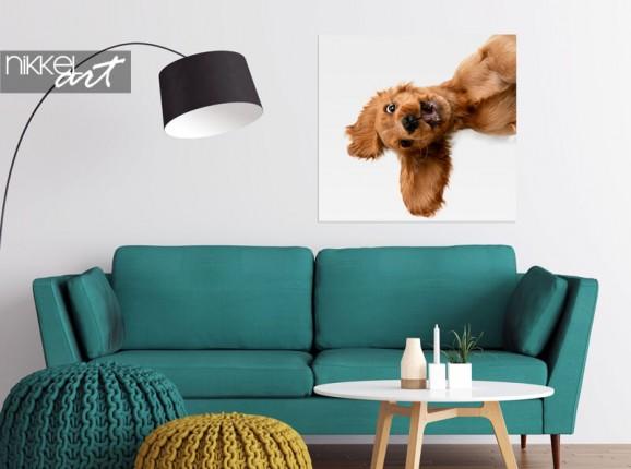 Photo de votre chien sur poster