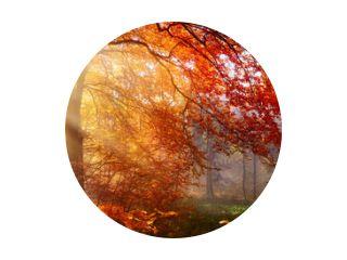 Herbst im Wald, mit Lichtstrahlen im Nebel und rotem Laub