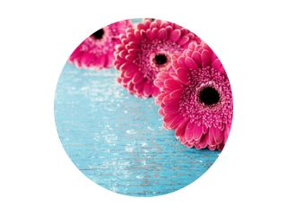 Beautiful spring greeting card for Mother or Womans day with fresh gerbera daisy flowers on vintage turquoise background..